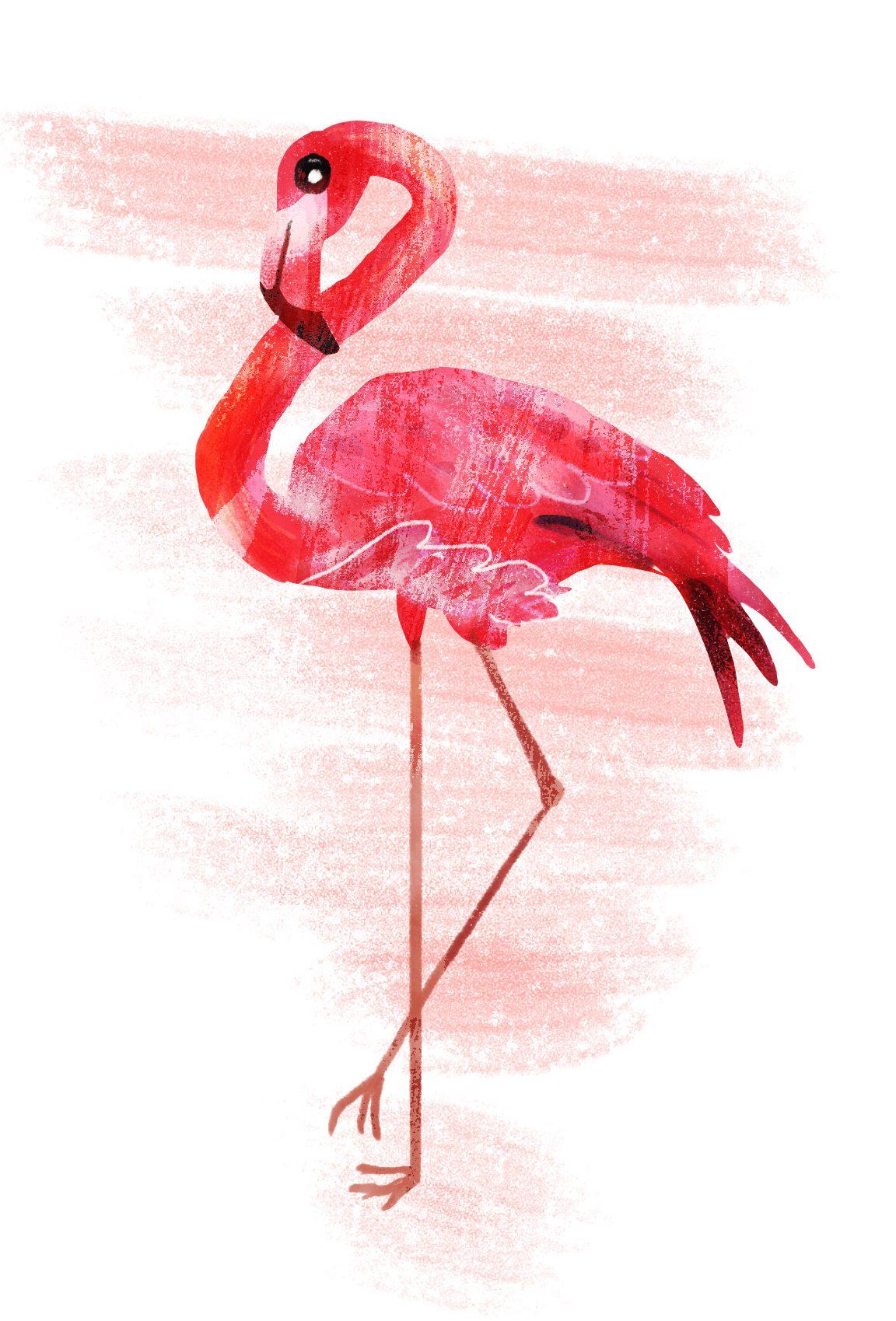 """ANIMAL ILLUSTRATION """"Un flamant rose"""" Peinture numérique  """"A flamingo"""" Digital painting"""