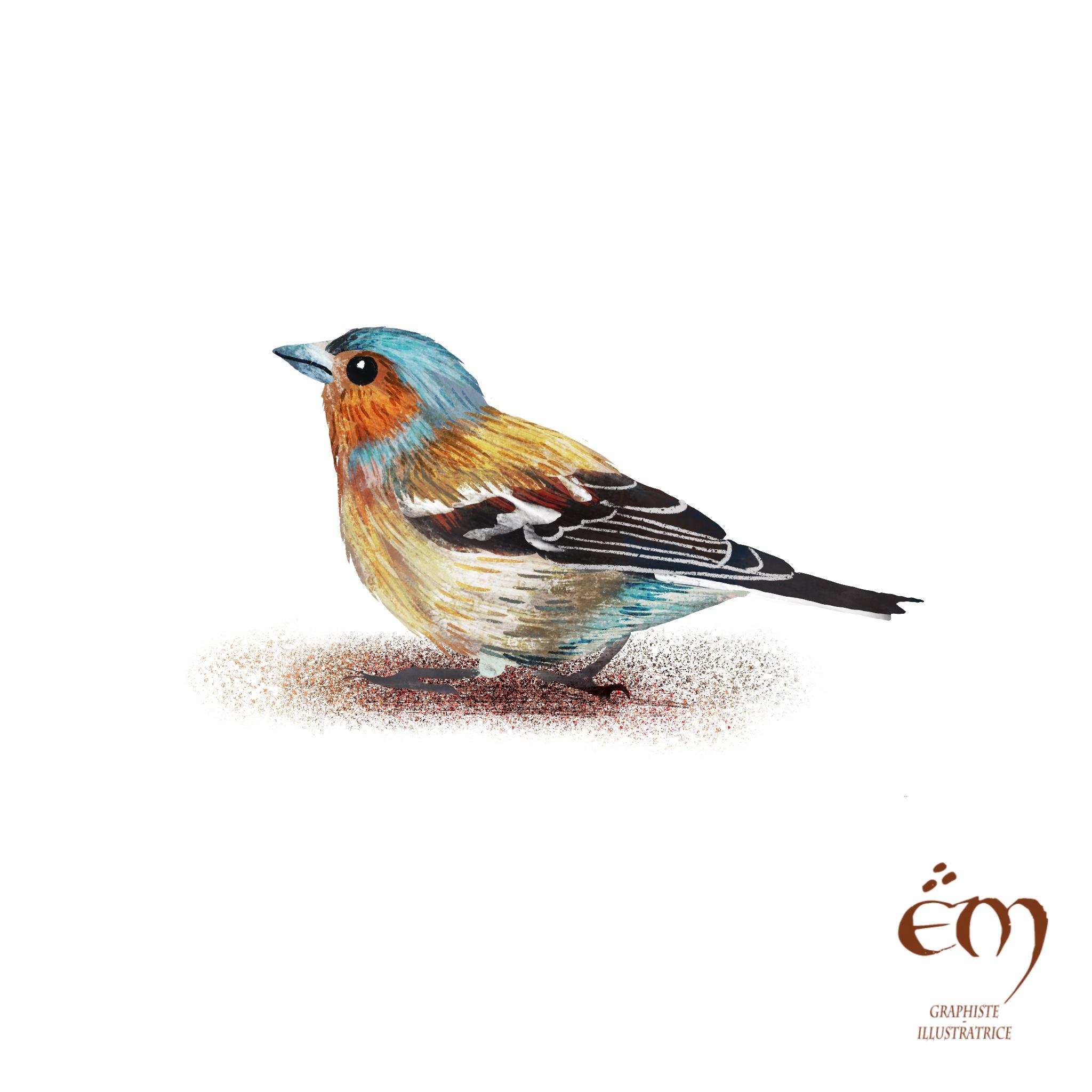 """100 DAY PROJECT / 100 MOST COLORED ANIMALS  """"Pinson des arbres"""" Peinture numérique  """"chaffinch"""" Digital painting"""