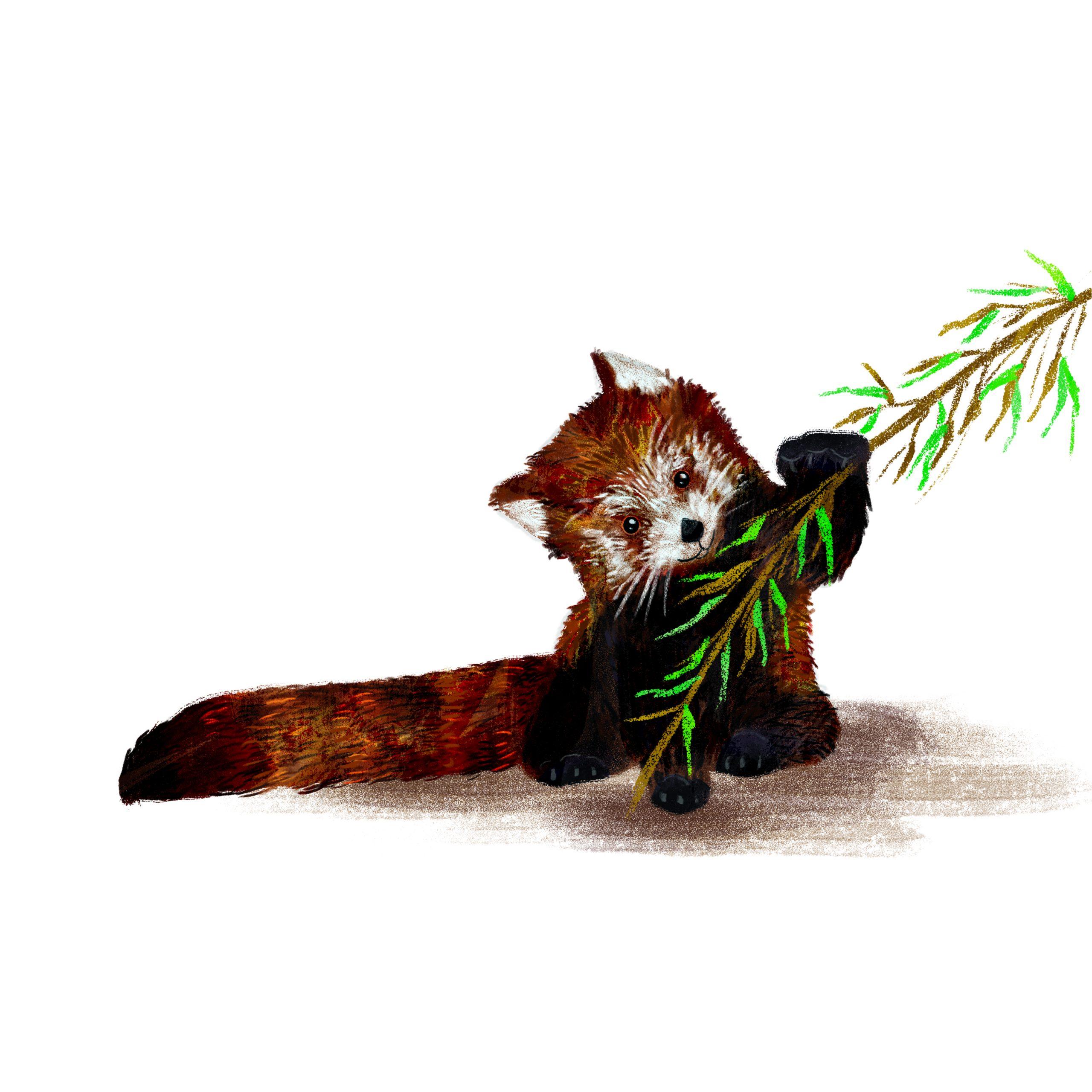 """ANIMAL ILLUSTRATION """"Un panda roux"""" Peinture numérique  """"A  red panda"""" Digital painting"""